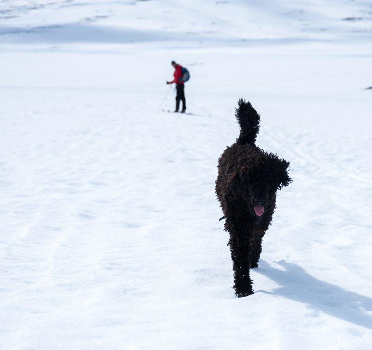 Skitur i Jotunheimen – 14-16, mai 2016