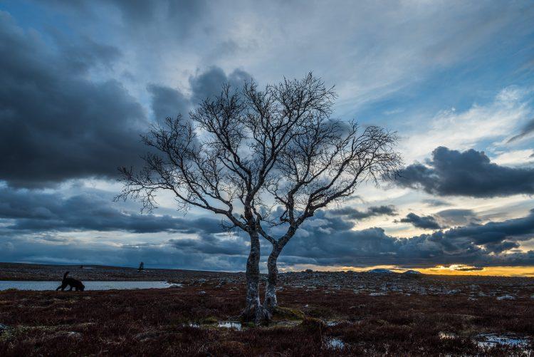 Vårtur Femundsmarka fra Elgå til Røa
