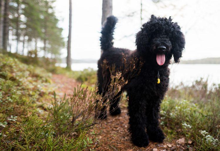 Nå har Frøya hunden min vært oss veterinæren