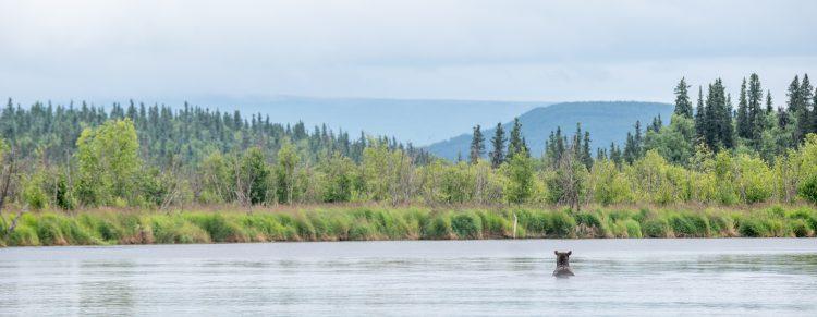 Sommerferien 2015 – Lower American creek Katmai Alaska 23-24 juli 2015