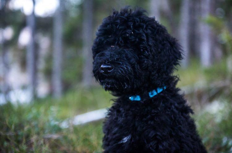 Nå har jeg fått hund – 15 november 2015 til 5 desember 2015