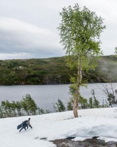 Mye snø i tregrensa