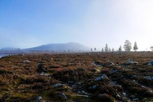 Femundsmarka øst for Røvollstjønna i tåke