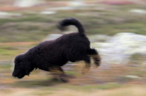 Frøya som løper