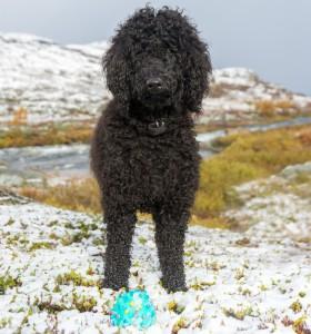 Frøya med høstens første snø