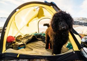 Frøya i teltet