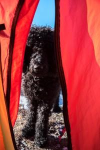 Frøya som ser inni teltet