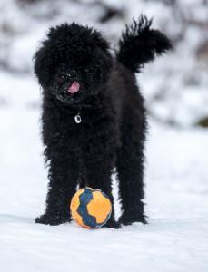 Frøya med lekeball