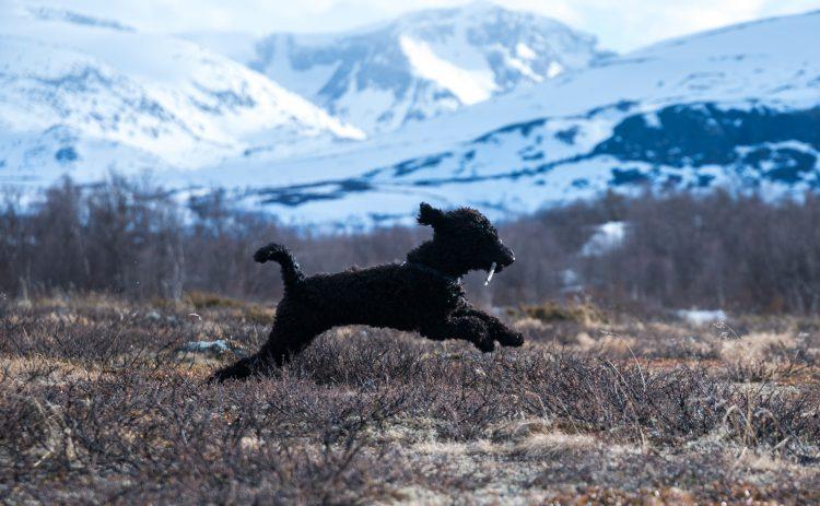 Bilder av Frøya hunden min