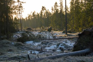 Trær som har ramla ned av Dagmar