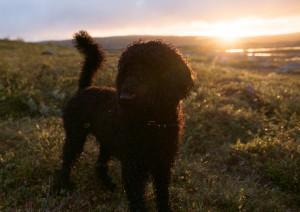 Frøya i solnedgang